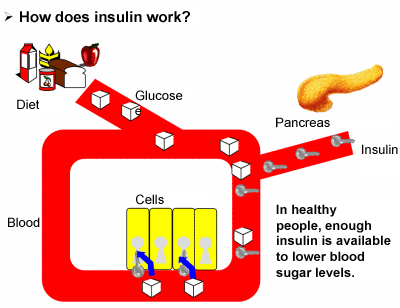 insulin for type 1 diabetes lab 6 tests to determine diabetes type  —in addition to attacking beta cells, the immune system in people with type 1 diabetes also targets insulin, says laffel.