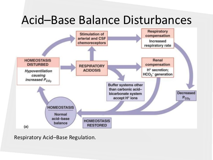 how does the body maintain acid base balance Your blood needs the right balance of acidic and basic (alkaline) compounds to function properly this is called the acid-base balance your kidneys and lungs work to maintain the acid-base .