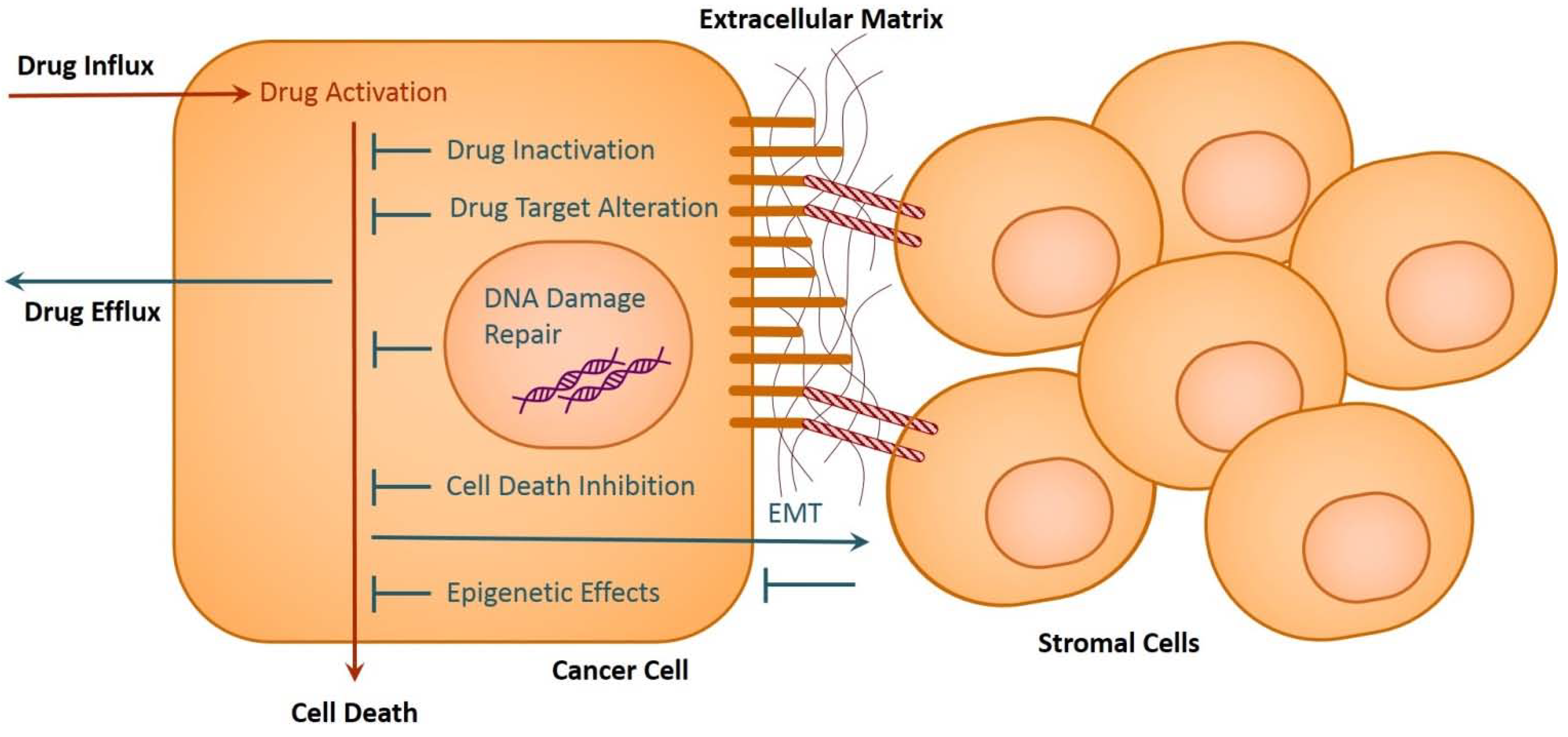 drug resistance mechanisms in cancer cells Abstract the mechanisms of intrinsic and acquired resistance to methotrexate (mtx) in human tumors are reviewed herein in blasts from patients with acute lymphocytic leukemia, resistance mechanisms found are decreased uptake and increased dihydrofolate reductase (dhfr) activity.